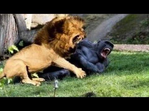 термобелья шокирующие подробности короля льва часто